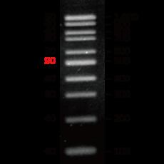 [EFM-D01-500] EF 100bp DNA Ladder RTU