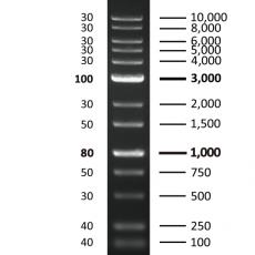 [EFM-D05-500] EF 1K Plus DNA Ladder RTU
